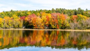 Fall Foliage on the Kennebec